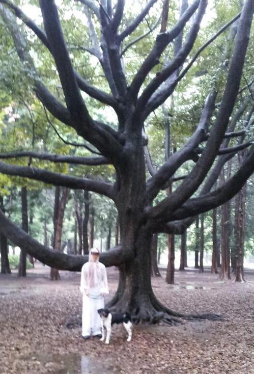 20120923_トトロの木.jpg