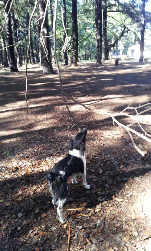 20121029_山の木こり.jpg