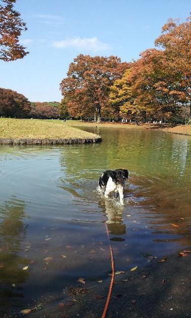 20121107_まだ泳げるよ.jpg
