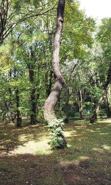 20121107_変な木.jpg