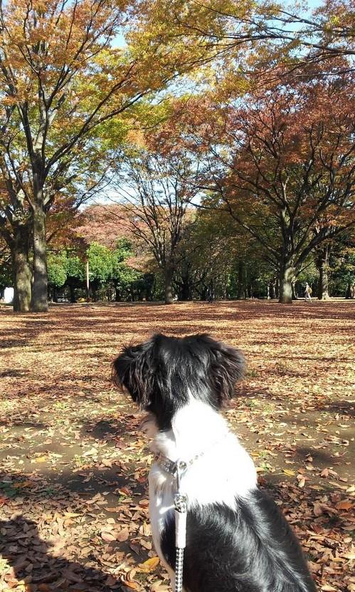 20121114_紅葉がきれい.jpg