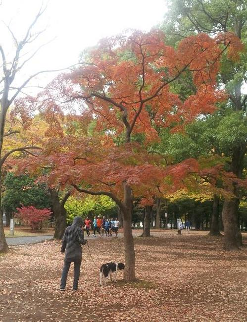 20121117_紅葉.jpg