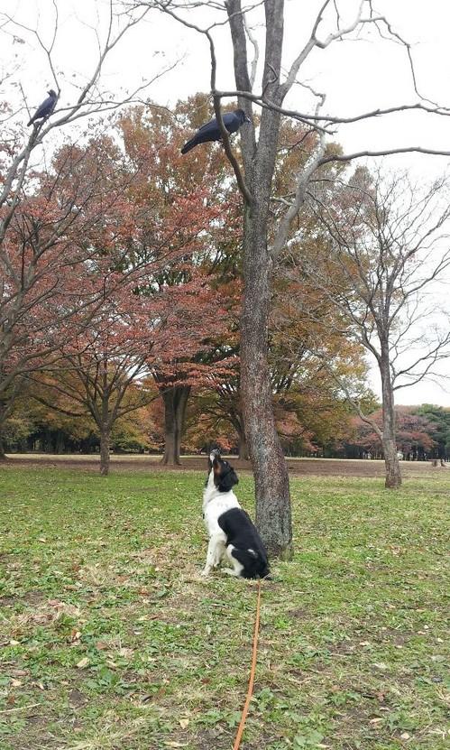 20121119_獲物は木の上.jpg