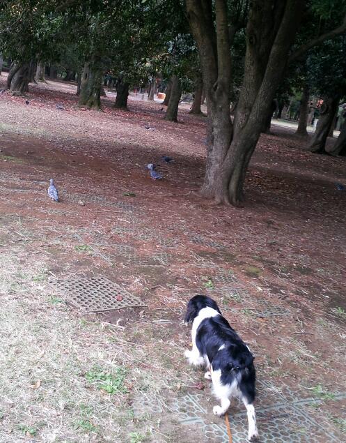 20121119_獲物は木の下.jpg