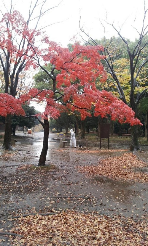 20121123_雨のもみじ.jpg