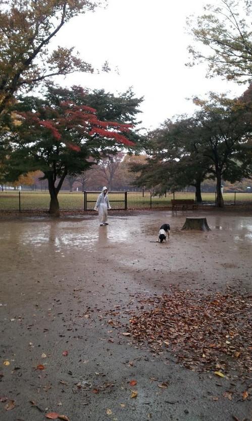 20121123_雨のラン.jpg