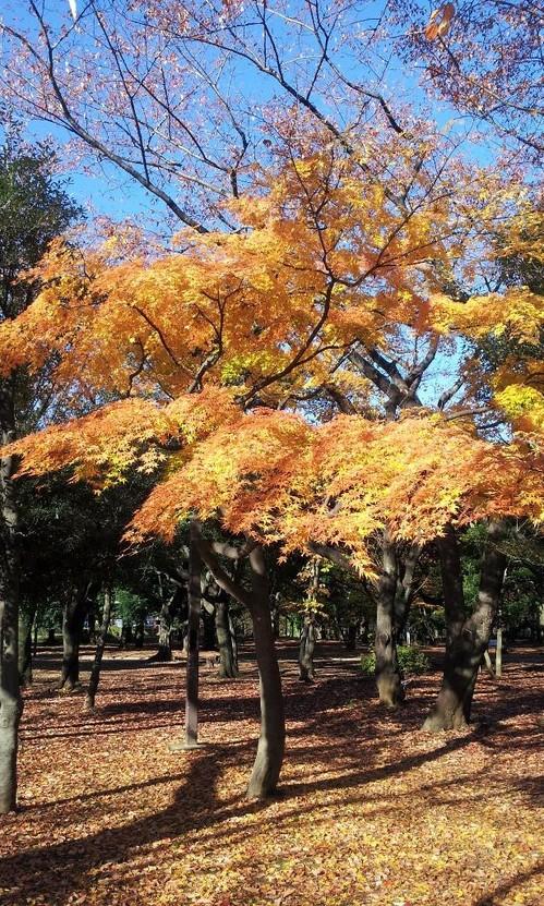 20121127_三色もみじ.jpg