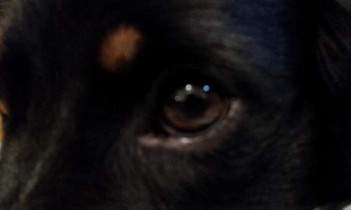 20120824_コルトの目.jpg