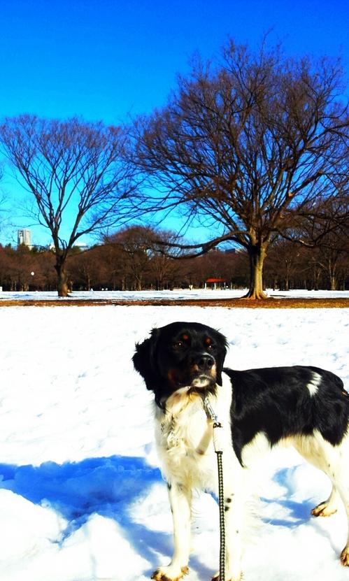 2013-01-18 雪の青空.jpg