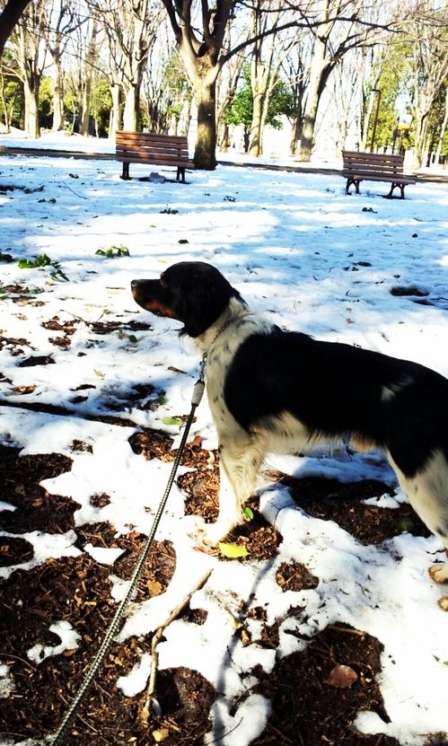 2013-01-18 雪解け.jpg