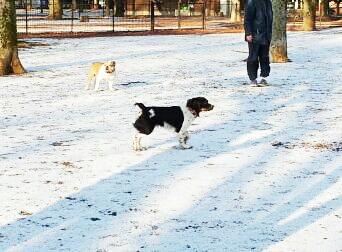 2013-01-29 白の絨毯ふたたび.jpg