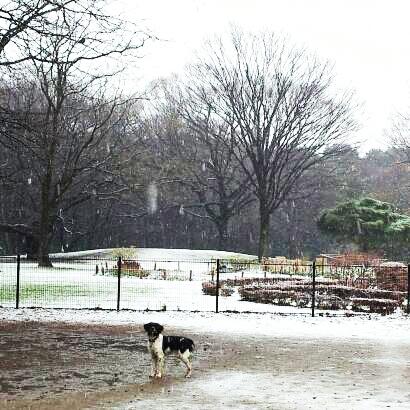 2013-02-06 三度の雪.jpg
