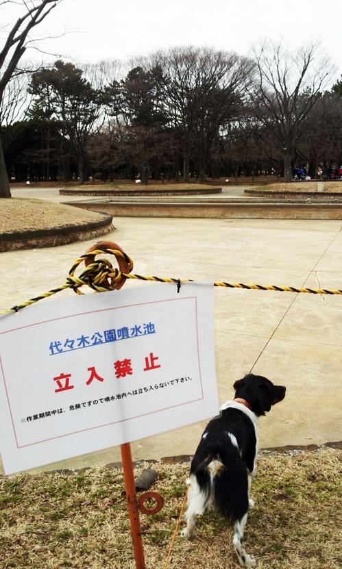 2013-02-17 立ち入り禁止だよ.jpg