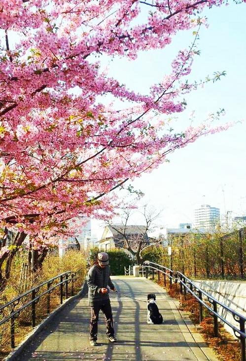 2013-03-09 梅が咲いた.jpg