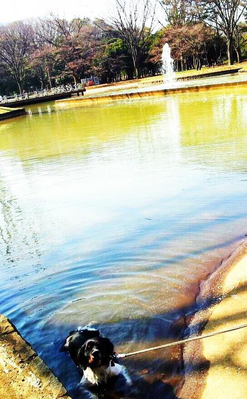 2013-03-17 初風呂.jpg