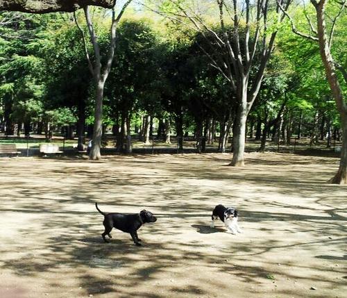 20130408 かけっこ.jpg