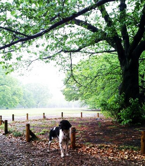 20130421 雨の桜の木の下で.jpg
