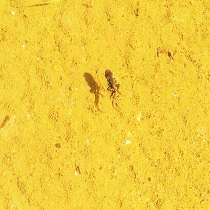 20130514 足のはえたカエルの子.jpg