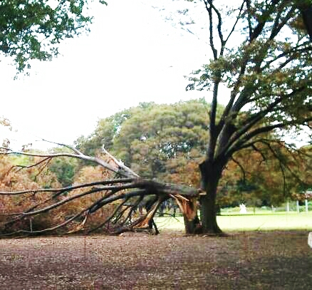 2012-12-30 台風の後2019.22.16.jpg