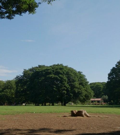 20130707 大きな木.jpg
