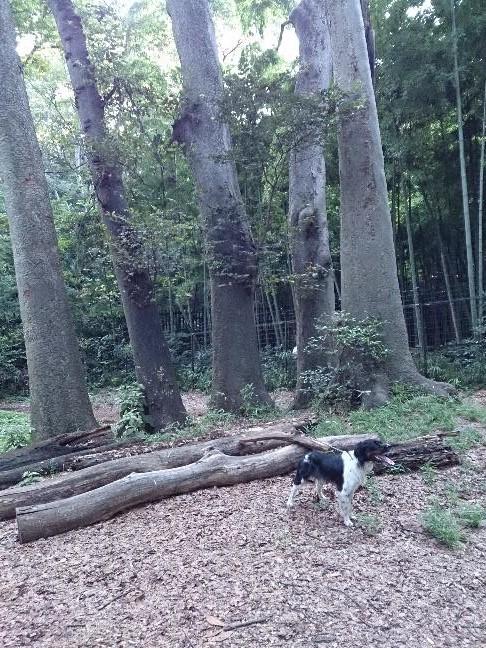 五本木休憩所.jpg