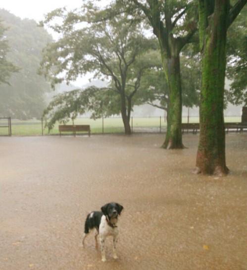 20130915_雨のラン.jpg