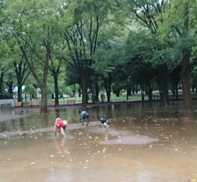 20130915_雨の中アナクレ.jpg