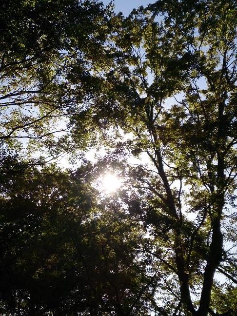 20130917 朝の木漏れ日.jpg