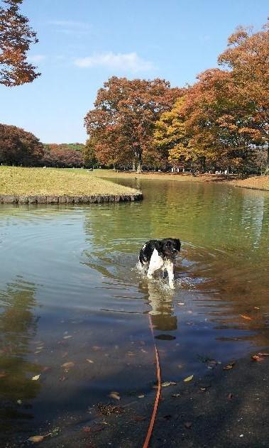 20121107_まだ泳げるよ.jpgのサムネール画像