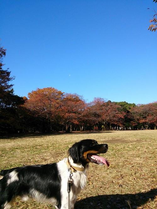20131123 秋空高し.jpg