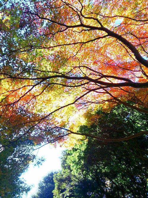 20131123_三色の紅葉.jpg