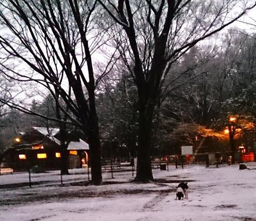 20140204_雪だぜ3.jpg