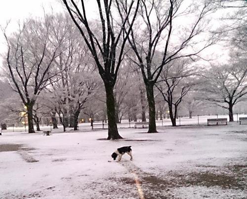 20140204_雪だぜ5.jpg