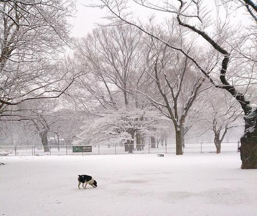 20140214_また雪だ.jpgのサムネール画像
