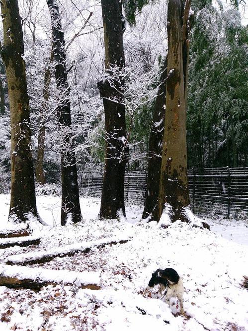 20140214_雪の五本木休憩所.jpgのサムネール画像のサムネール画像