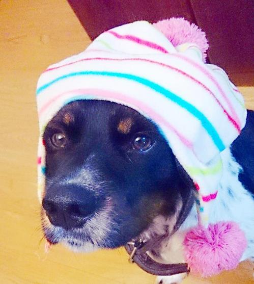 20140430 頭巾3.jpg