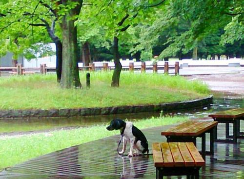 20140629 雨の池.jpg