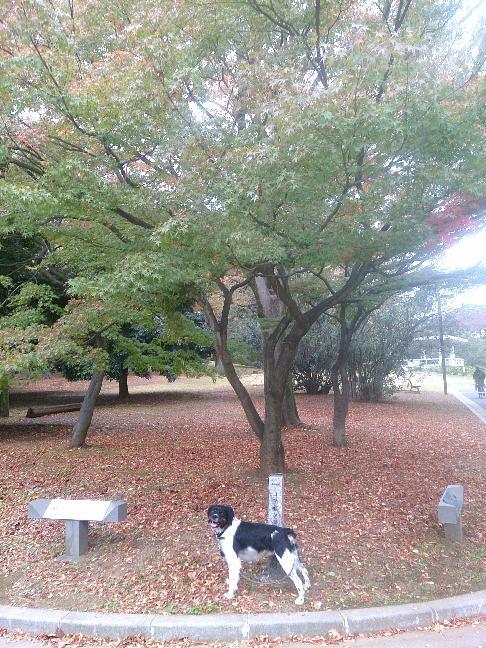20141106_紅葉の始まり.jpg