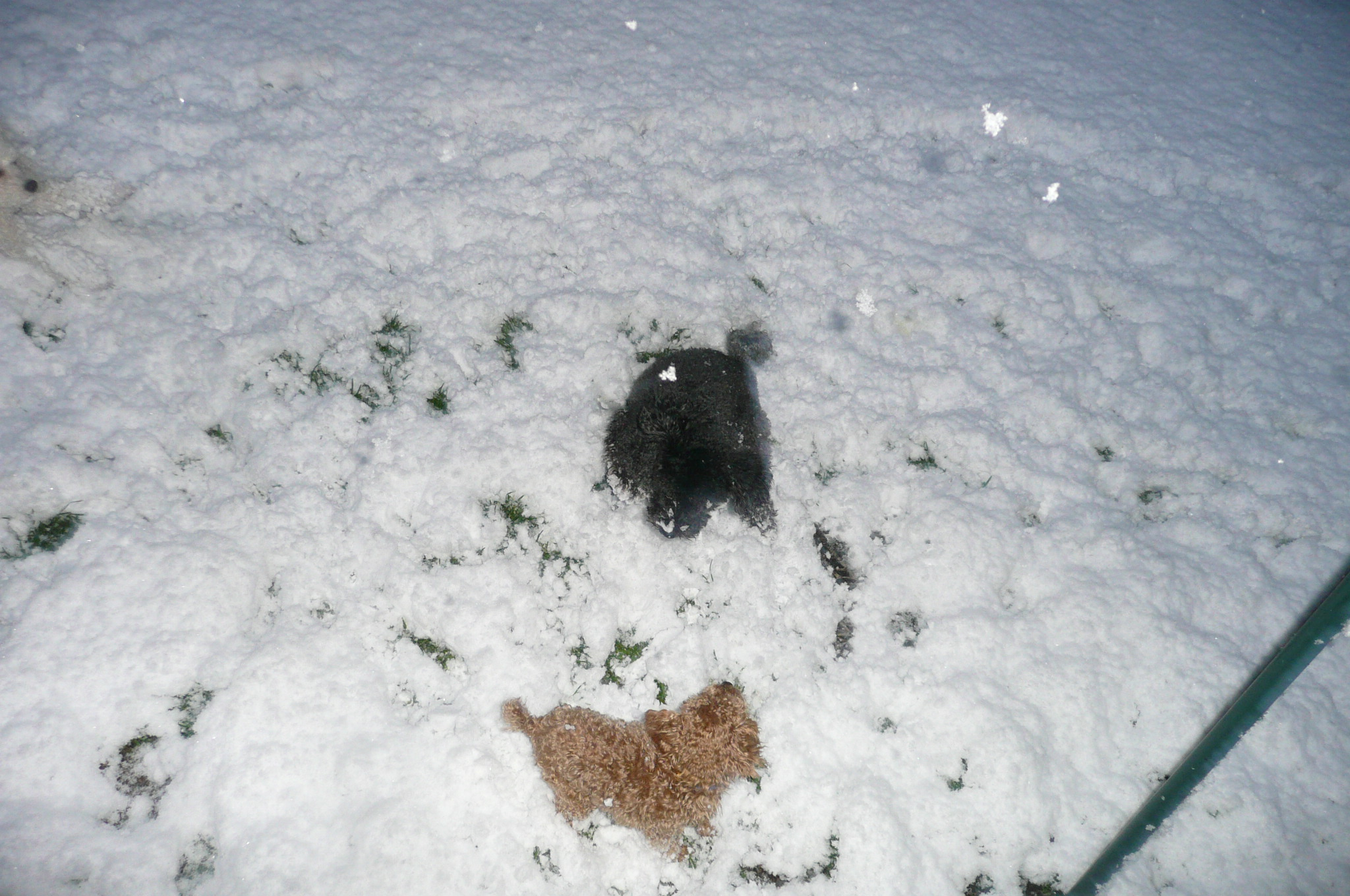 雪に大興奮.JPG