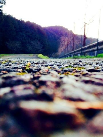 春の小道.JPG