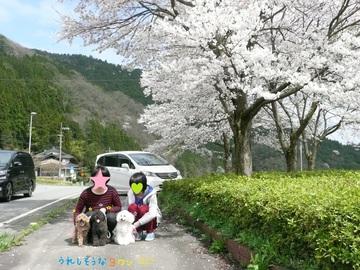 桜の木の下で - コピー.JPG