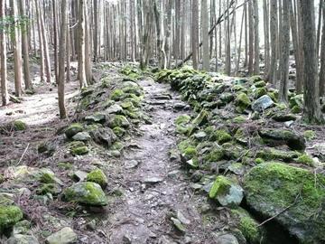 春の香り立つ林道のサムネール画像