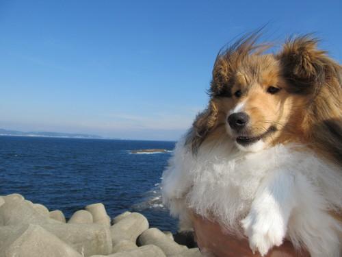 江の島散歩.JPGのサムネール画像