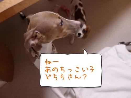 ゆずモカ8-1.jpg