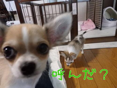 らいむ2-1.jpg