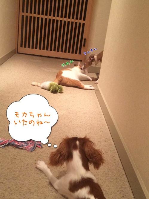 モカわさび1-1.jpg