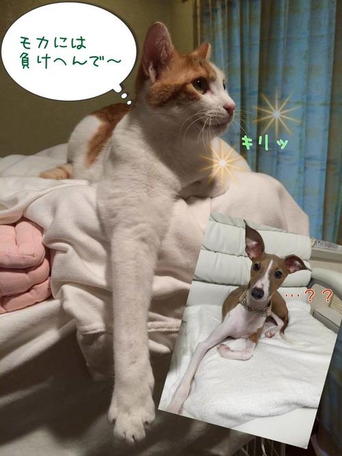 モカわさび2.jpg