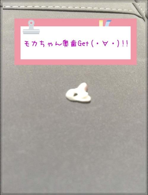 モカ7-1.jpg
