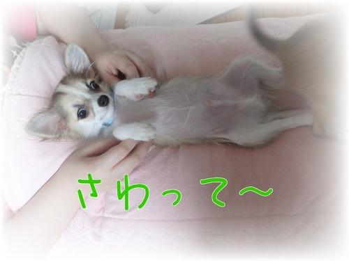20150707みんと-1.jpg