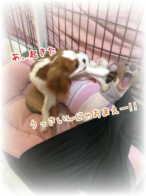 ゆずモカ3_20150904.JPG